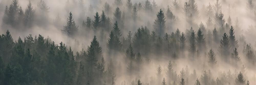 Bosbehang - Fotobehang met een bos