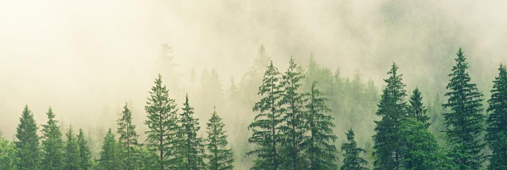Fotobehang met mistige landschappen