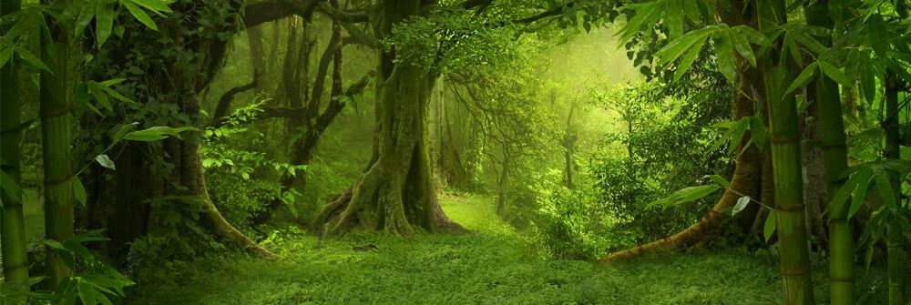 Fotobehang van oerwoud
