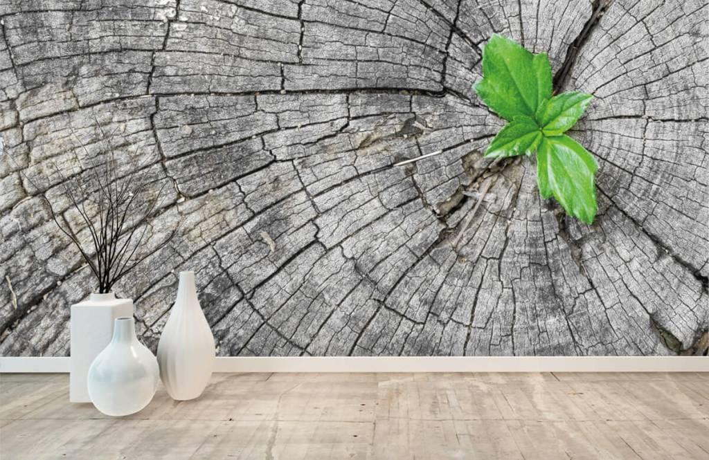 Hout behang - Doorsnede van een boomstam - Slaapkamer 1