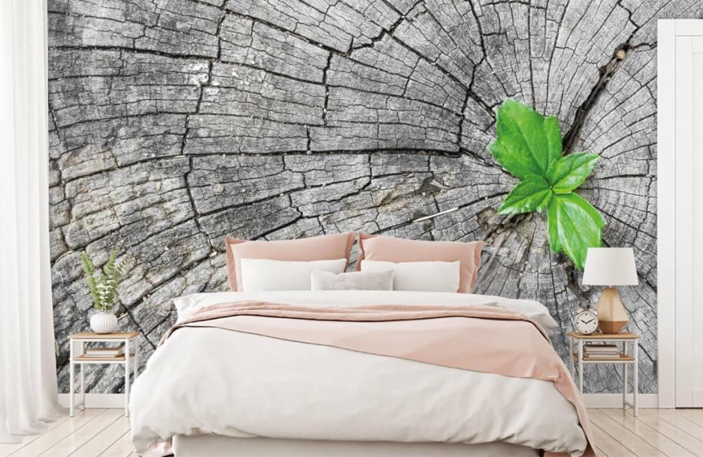 Hout behang - Doorsnede van een boomstam - Slaapkamer 4