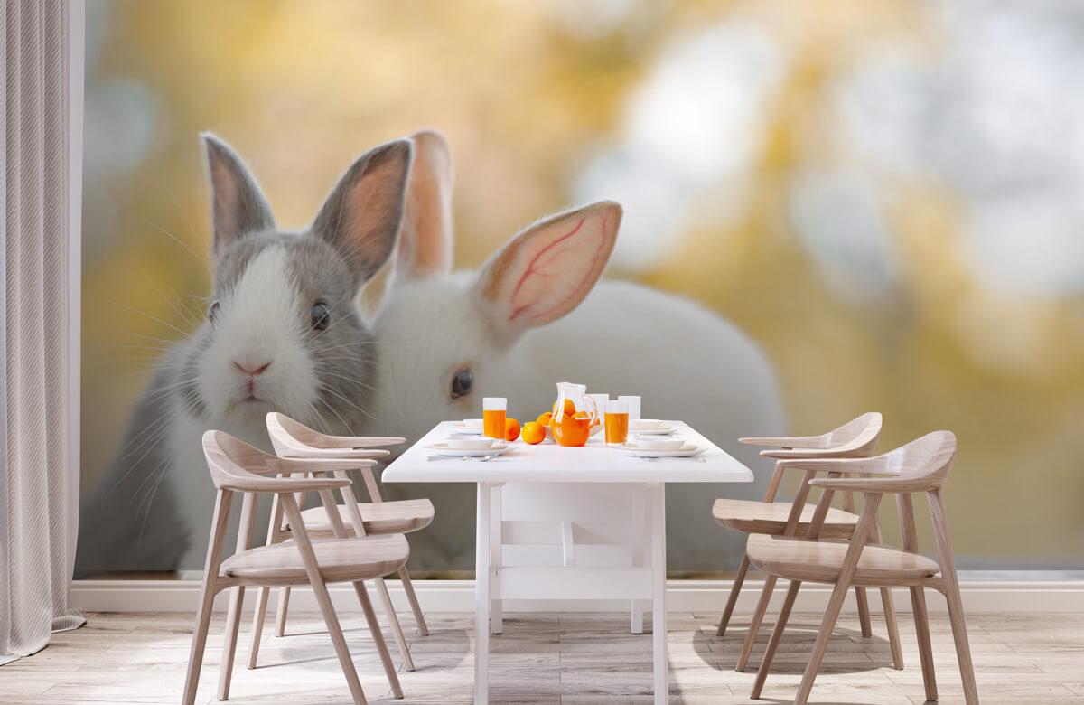 Dieren Close-up van konijnen 3