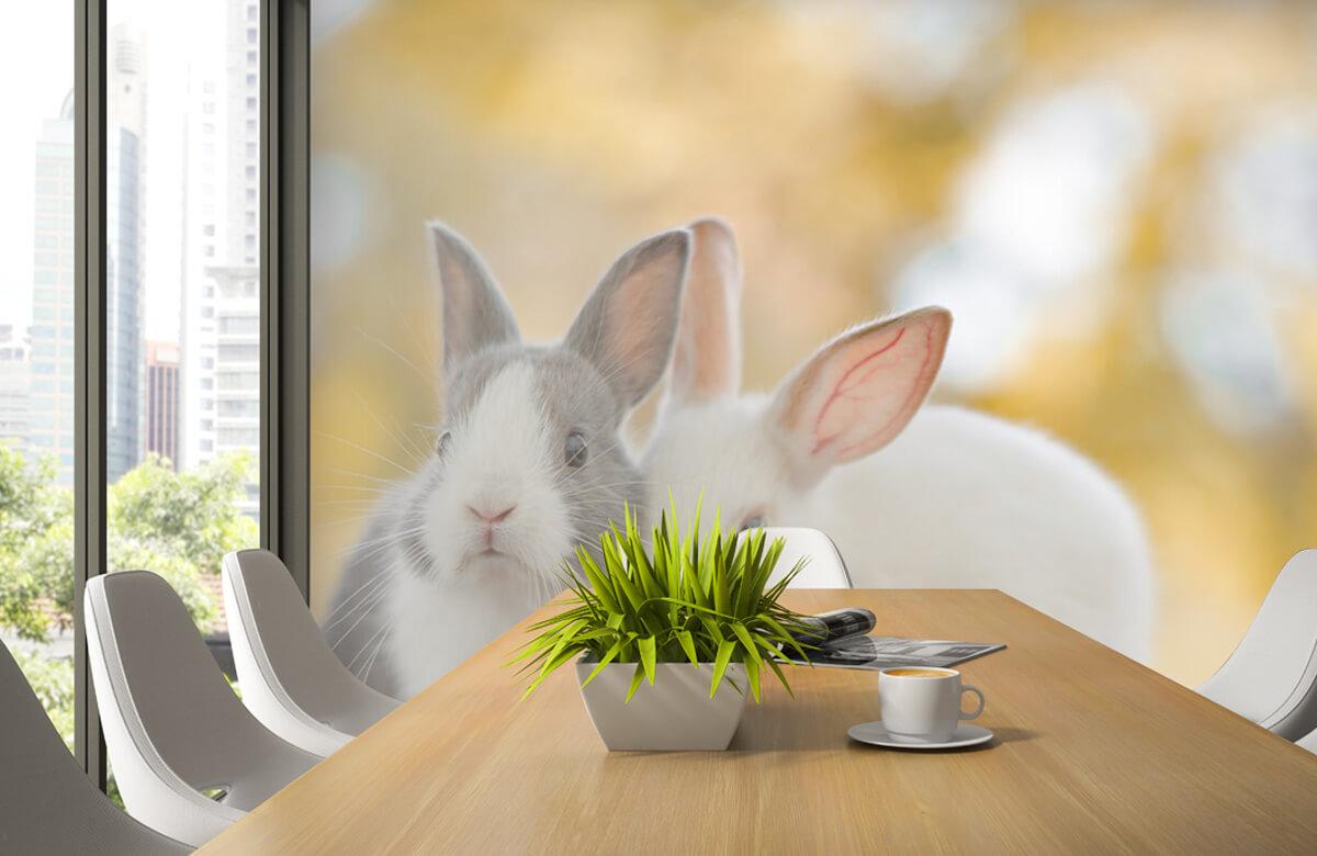 Dieren Close-up van konijnen 6