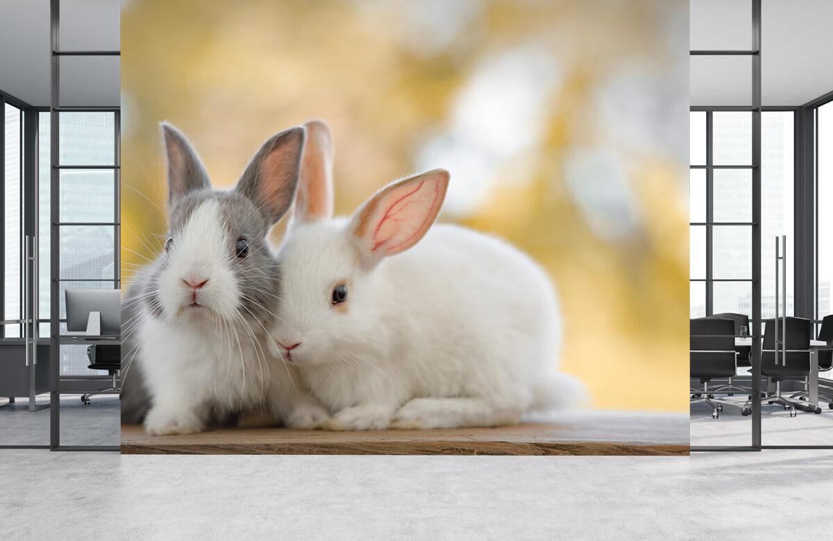 Dieren Close-up van konijnen 2