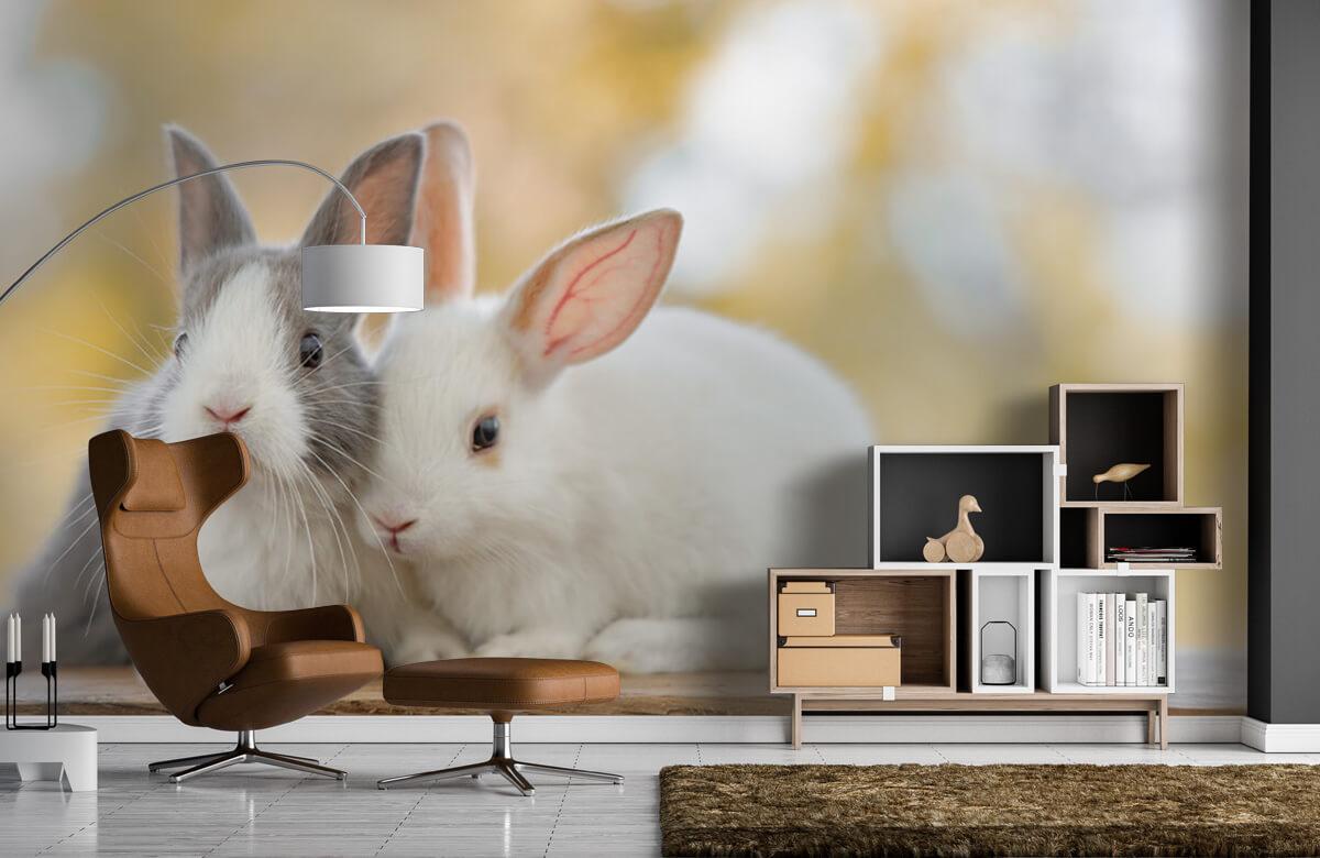 Dieren Close-up van konijnen 7