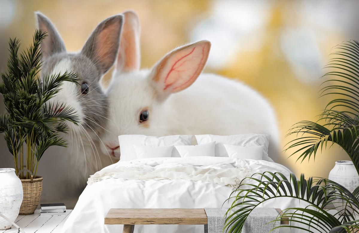 Dieren Close-up van konijnen 9
