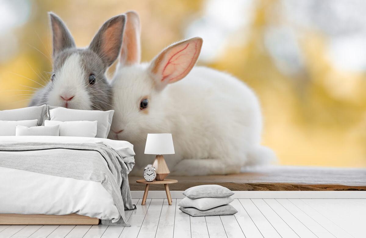 Dieren Close-up van konijnen 5