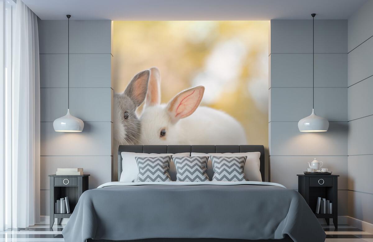 Dieren Close-up van konijnen 11