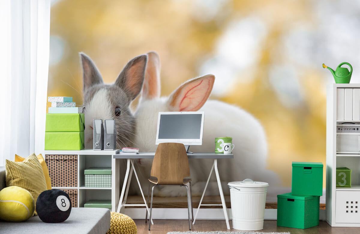 Dieren Close-up van konijnen 4