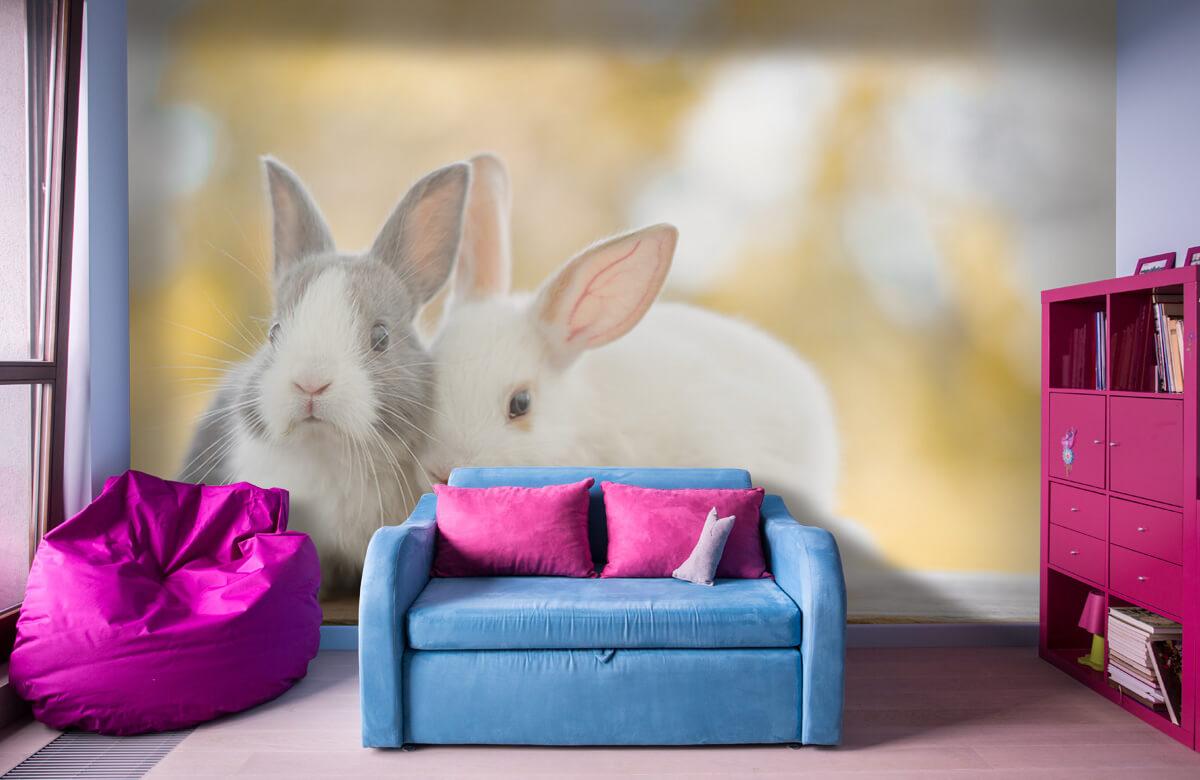 Dieren Close-up van konijnen 1
