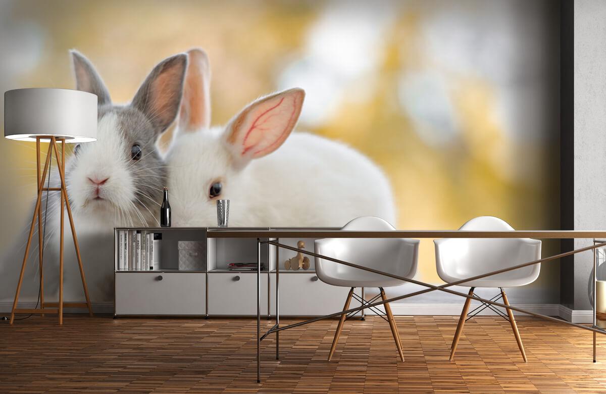 Dieren Close-up van konijnen 10