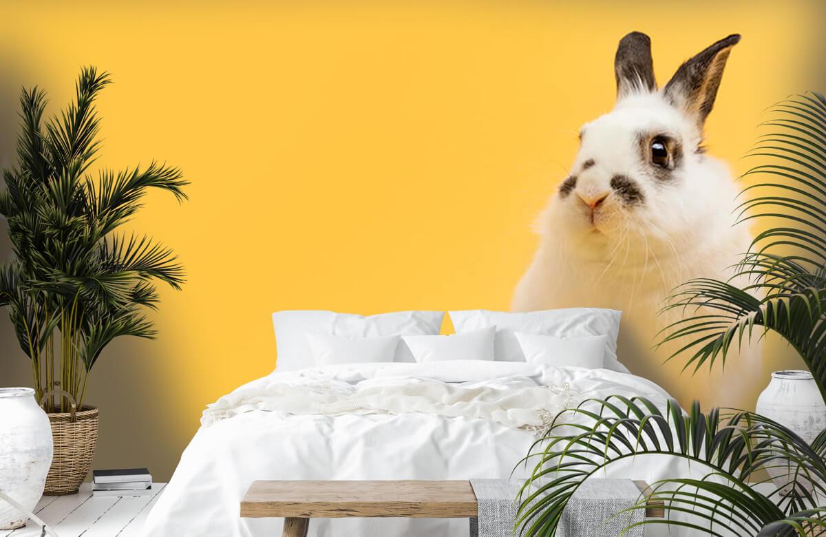 Dieren Poserend konijn 8