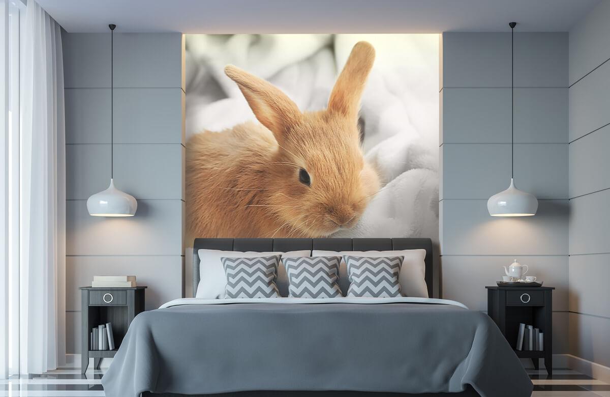 Dieren Bruin konijntje 11