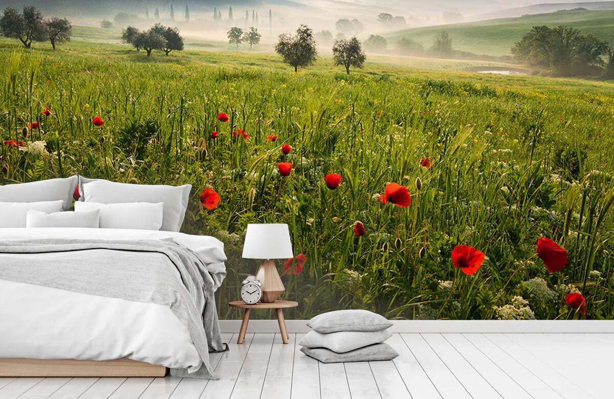 Landscape Tuscan spring 6