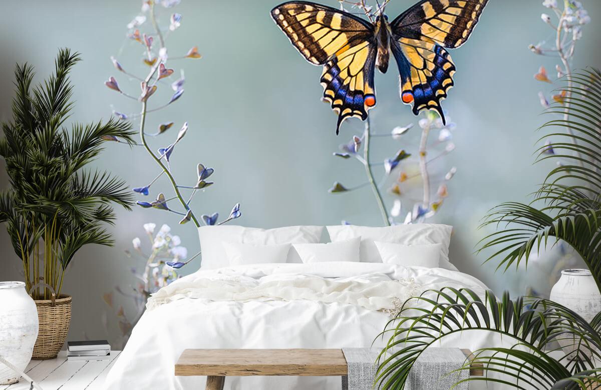 Macro Swallowtail beauty 7