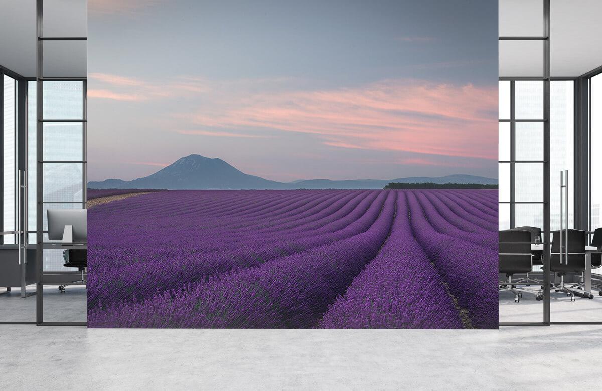 Landscape Lavender field 8