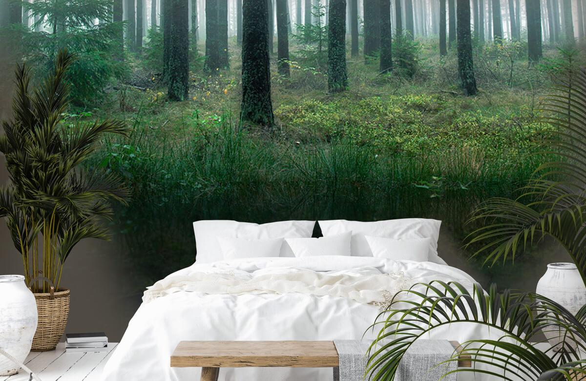 Landscape Lake in forest 9