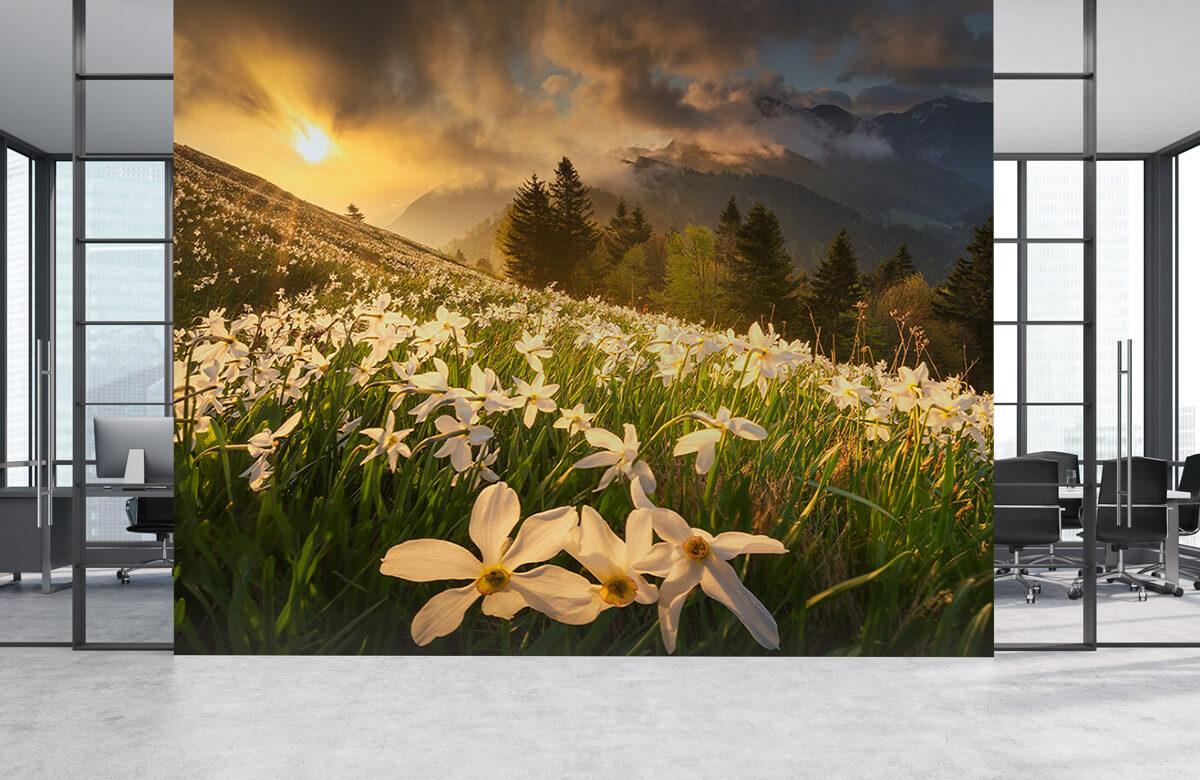 Landscape White carpet 6