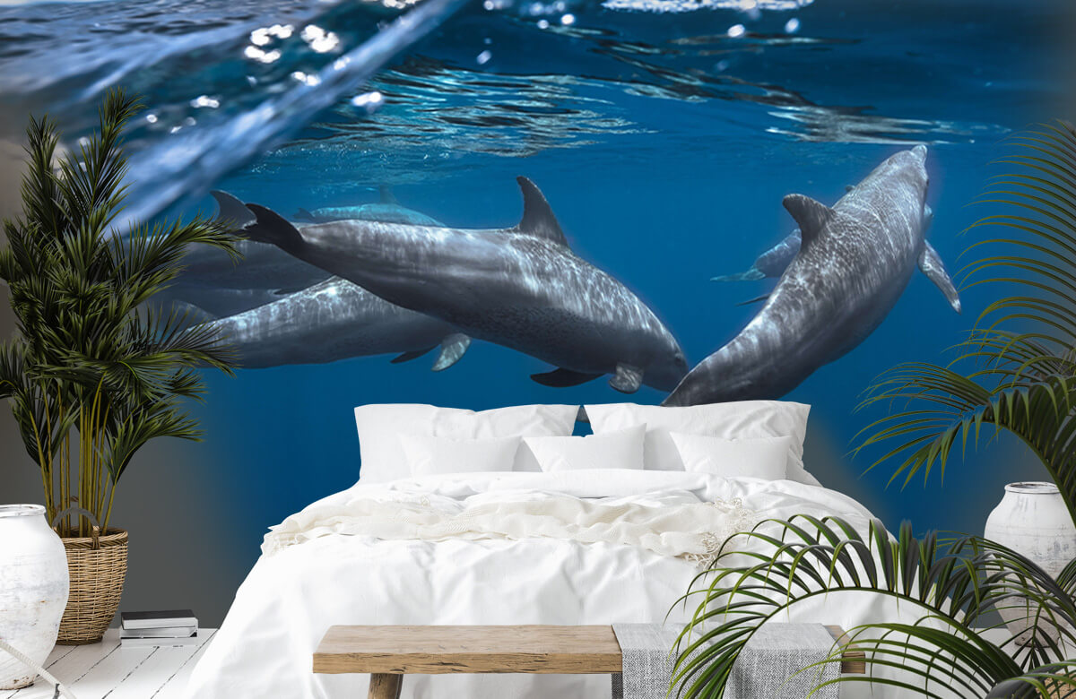 Underwater Dolphins 3