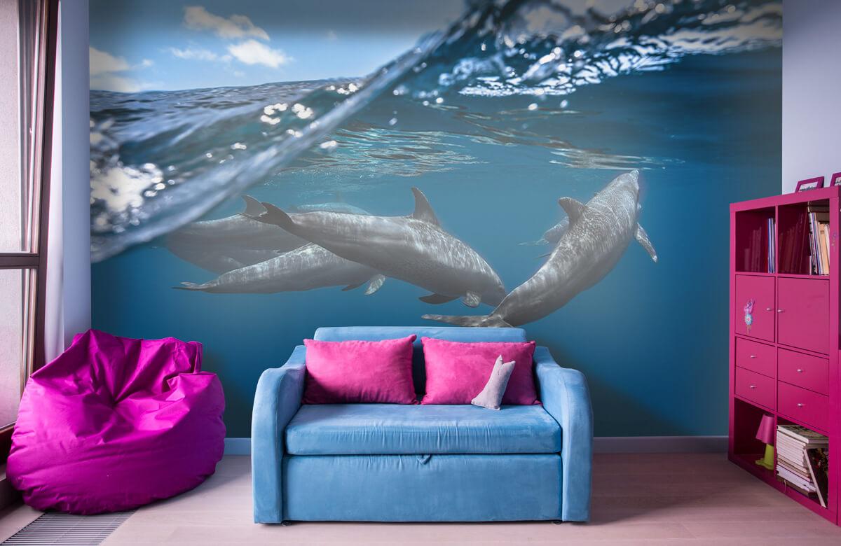 Underwater Dolphins 1