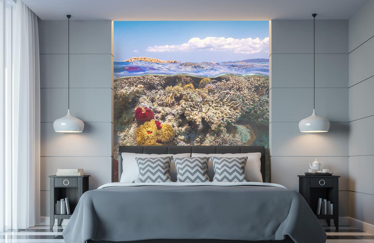 Underwater Mayotte : The Reef 10