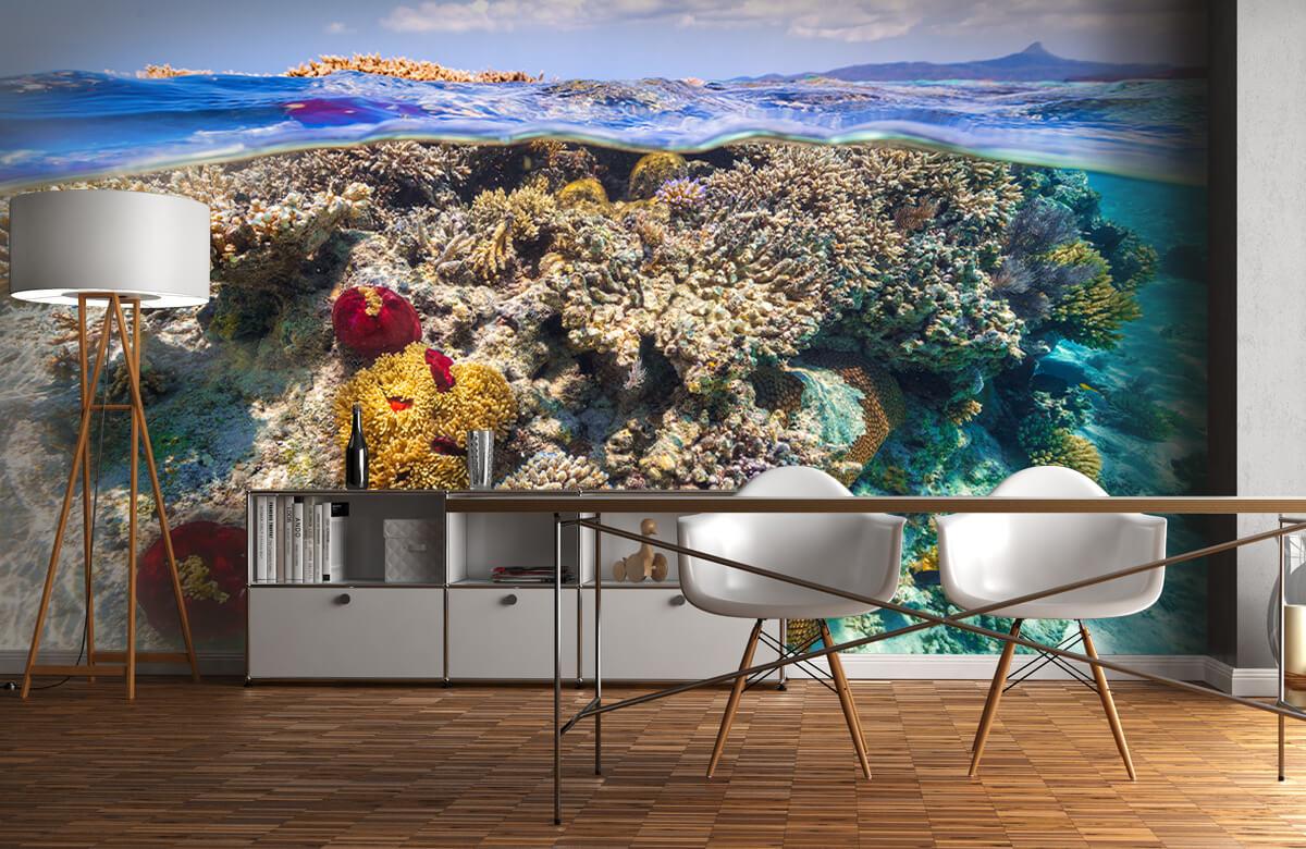 Underwater Mayotte : The Reef 5