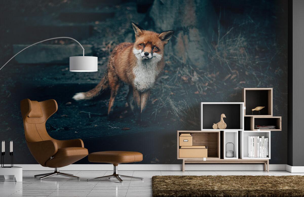 Wallpaper Nieuwsgierige vos 5