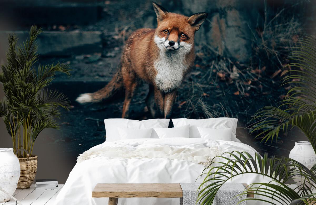 Wallpaper Nieuwsgierige vos 7