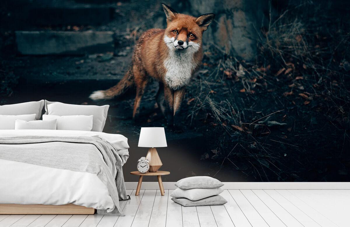 Wallpaper Nieuwsgierige vos 9