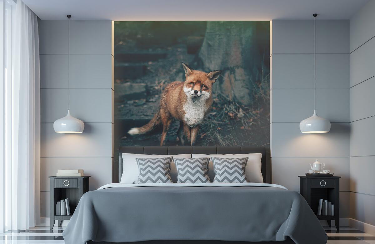 Wallpaper Nieuwsgierige vos 11