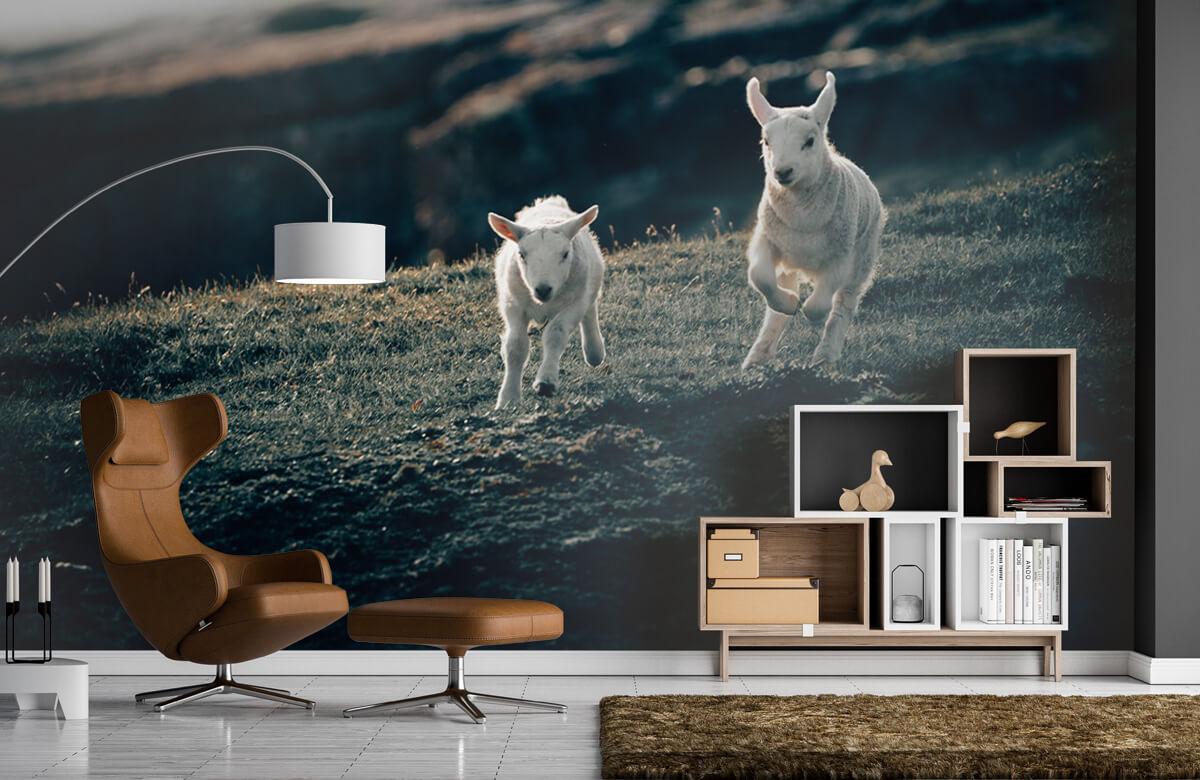 Wallpaper Spelende lammetjes 10
