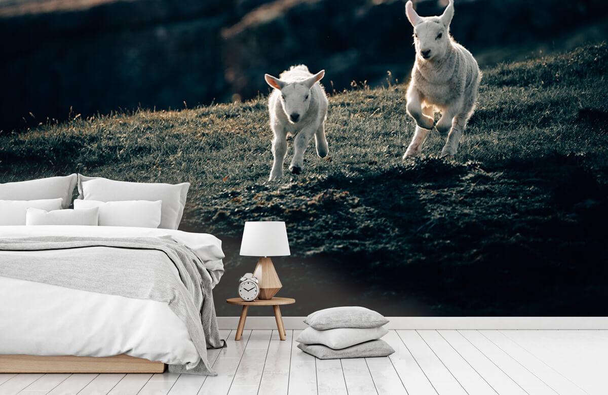 Wallpaper Spelende lammetjes 9
